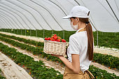 Farmer in medical mask holding basket with strawberries