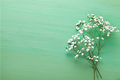 Few twigs  of Gypsophila flowers lay on light green  wooden table. Top view with copy space. Flat lay