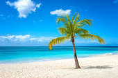 Amazing tropical paradise beach with white sand, palm, sea and blue sky, outdoor travel background, summer holiday concept. Caribbean, Dominican Republic