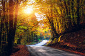Narrow winding road in dark autumn forest, beautiful landscape with colored trees and sun, natural travel background