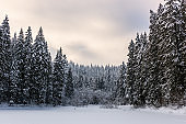 Scenic winter landscape, view of the frozen and snowy alpine lake Synevyr (sea eye of Carpathians) and snow covered trees, Carpathian mountains, outdoor travel background