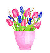 Watercolor spring bouquet in pot. Hand painted pink tulips with leaves, muscari flowers and pussy willow branches in flowerpot