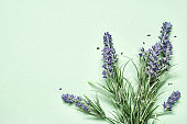 Lavender bouquet on mint green background. Aromatherapy treatment and Skincare spa cosmetics. Minimal background concept