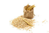 grains of wheat or rye in bag with bunch of dry ears isolated on white background