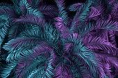 Palm Tree Neon Lightning Background, Minimal Summer Concept