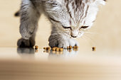 Baby kitten eats dry food at home. Close-up.