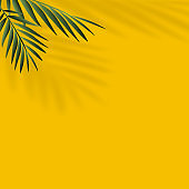 Summer background with shadow of tropical leaves. Vector