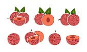 Bayberry logo. Isolated bayberry on white background