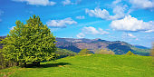tree on the meadow in mountains