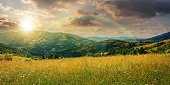 rural landscape with grassy meadow at sunset