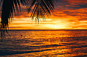 Orange sunset in tropical climate with palm trees