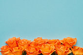 Orange roses flowers border on a blue background. Valentines Day, Mothers Day and Birthday celebration concept.