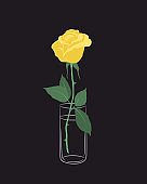 Rose in a glass jar. Yellow flower with green leaves