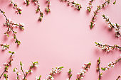 Twigs with flowers on pink background, frame