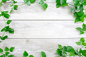 Green leaf border on white wood