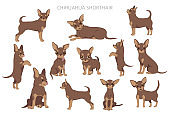 Chihuahua dogs  in different poses. Adult and puppy set
