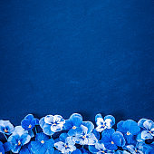 Pansy Flowers. Blue Flowers on Navy Blue Texture. Top view, Flat lay, Copy Space. Classic Blue Background