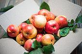 Raw Fruits. Fresh Apple Fruit. Garden Red Apples in Cardboard Box. Closeup