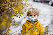 Cute blond toddler child, boy, running around blooming yellow bush, spring time, while snowing