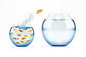 Red fish jumps from a full of fishes cruet to an empty and bigger one. concept of escape from crowd