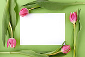 spring flat lay with paper sheet isolated on green background