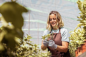 Happy focused gardener cutting sprouts with pruner in greenhouse