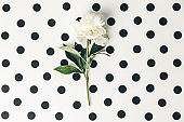 Flat-lay of Beautiful peony flower on homemade white polka dots background