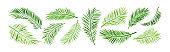 Palm leaf vector, green summer branch plant jungle, nature set icon. Tropic illustration