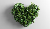 Green tropical leaves in heart shape on white background.