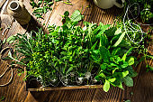Fresh Aromativ Herbs. Culinary Seasoning Healthy Eating.