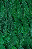 Close up Macro View on Sage or Salvia Leaves. Abstract Texture Background