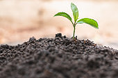 Small seedlings that germinate from complete soil The concept of caring for seedlings and soil Resources that should be maintained Save the world by planting trees World environment day.