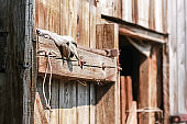 Old wooden barn door with steel hinges.