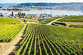 Famous Rheingau vineyards region in late summer in Germany, green hills on sunny day. Famous vineyard region near Mosel and Rhine in Germany. Making of delicious red wine.