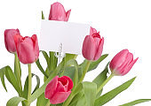 Tulips on a white background with a card for you persoal message