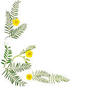 Flowers pattern texture. Twigs with green leaves and yellow chamomile isolated on white background