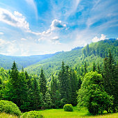 Beautiful summer mountain landscape. Vast meadows and forest