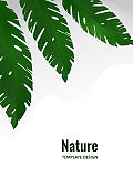 Composition from exotic tropical leaves on a white background. Template for your design. Vector