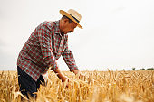 Farmer in the  straw hat standing in a wheat field. Cereal farming.