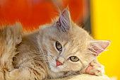 Kitten Beautiful cat