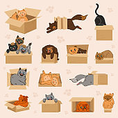 The collection of cute cute car in the paper box in flat vector style.  Cute kittens and cats looking out of box