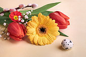 Easter decorations, spring flowers and quail egg. Orange gerbera daisy, red tulips, pussy willow, primrose and baby's breath flowers on cream background. Closeup on springtime flowers