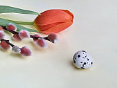 Easter decorations. Quail egg, pussy willow and red tulip on off white wooden table. Close-up on Springtime flowers and decor. Spring greeting card in red, green and cream. Simple calm arrangement