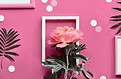 Pink peony in white frame, palm leaves. Creative flat lay on abstract geometric background with frames and polka dots on pink paper