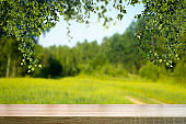 Table wood background in forest. Background of a blurred green summer forest with sunlight