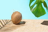 Natural fresh coconut under palm shades on the sunny sandy beach with monstera leaf. Bright summer blue background. Minimal and optimistic concept.