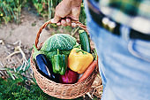 Close up of basket full of freshness vegetables