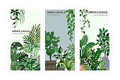Set of three card templates with indoor plants