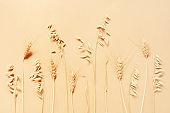 Autumn cereal ears, minimalistic composition