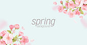 Sakura flowers realistic floral banner. Cherry blossom vector greeting card design. Spring flower illustration background, exotic poster template, voucher, brochure, flyer